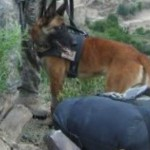 A MILITARY DOG HANDLING TEAM