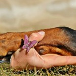 EMOTIONAL ASSISTANCE DOGS