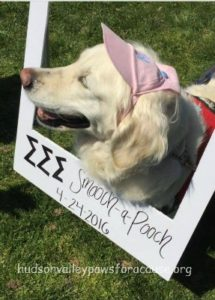 Awesome Weekend Marist College Fundraiser Ivy Grace Smooch a Pooch