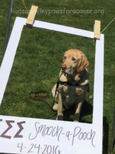Awesome Weekend Marist College Fundraiser Jake Smooch a Pooch