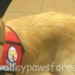THERAPY DOG COOPER CHEERS UP PATIENTS AT MORNINGSIDE!