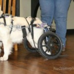 THERAPY DOG IVY GRACE BRINGS CHEER TO THE PROMENADE