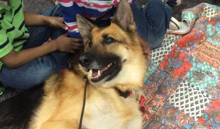 THERAPY DOGS GO TO SCHOOL