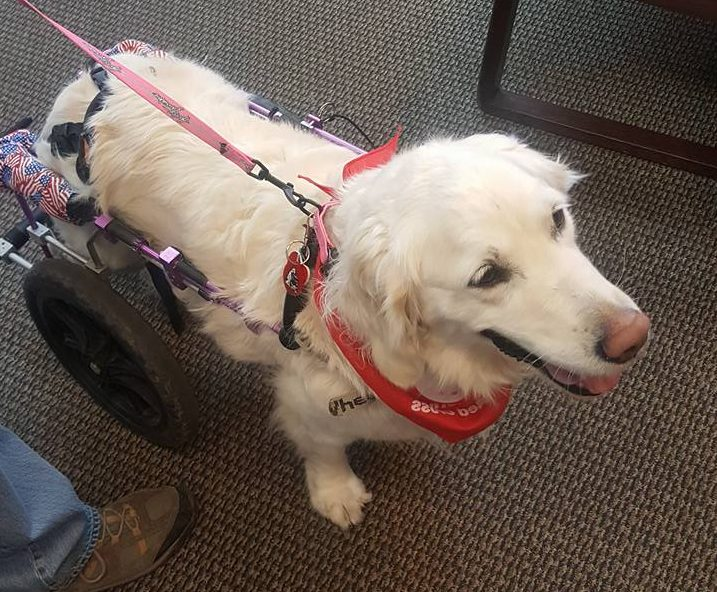 IVY GRACE OUR RED CROSS THERAPY DOG TO THE ARMED FORCES