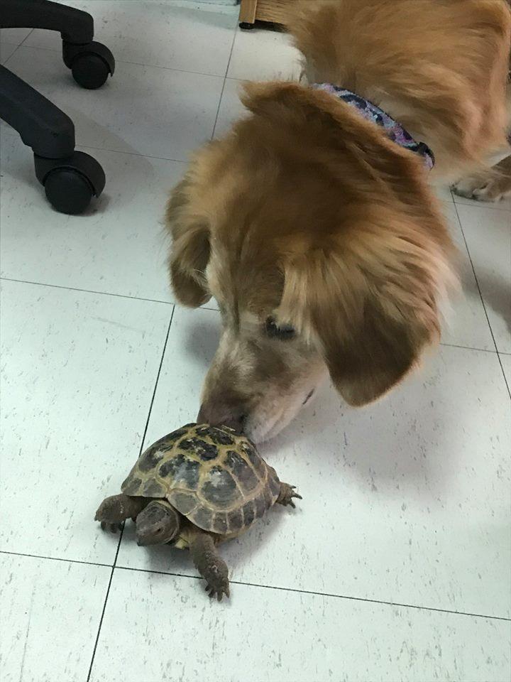 NEW FRIENDS