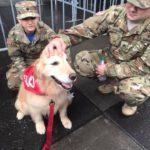 INTREPID INVITES DOGS FOR FLEET WEEK