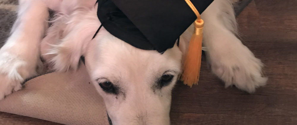 THERAPY DOGS DELIGHT MOUNT STUDENTS