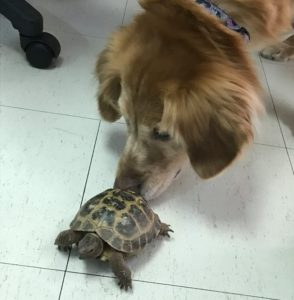 Dog With Turtle